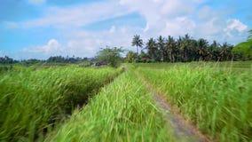 La cámara vuela en el camino con una vista maravillosa de los campos del arroz de palmeras y de la hierba Indonesia, Bali almacen de metraje de vídeo
