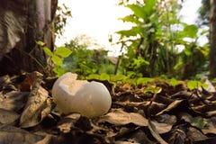 La cáscara de huevo que los polluelos salen de los huevos fotos de archivo