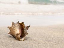 La cáscara de la concha se lavó para arriba en la orilla de una playa blanca de la arena Foto de archivo