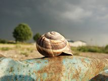 La cáscara del caracol en el metal viejo puede antes de storn Foto de archivo libre de regalías