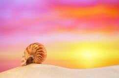 La cáscara del nautilus en la arena blanca de la playa, contra el mar agita Imagenes de archivo