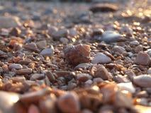 La cáscara entre rocas fotografía de archivo libre de regalías