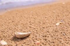 La cáscara está mintiendo en la costa después de que lluvia detrás de las ondas y del mar fotografía de archivo libre de regalías