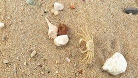 La cáscara y el cangrejo fósiles en la arena varan fotografía de archivo libre de regalías