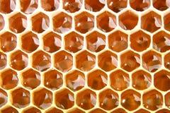 La célula de la miel se llena de la miel fresca Panal El producto de la apicultura Fotos de archivo libres de regalías