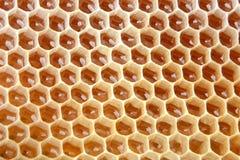 La célula de la miel se llena de la miel fresca Panal El producto de la apicultura Imagenes de archivo
