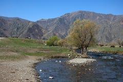 La côte pierreuse d'une rivière de montagne se plie autour d'un buisson isolé image stock
