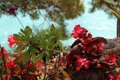 La côte d'Amalifi, ville de Positano Photos stock