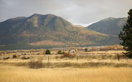 La caída amarilla de las colinas de los álamos tembloses de la granja colorea Montana Foto de archivo libre de regalías