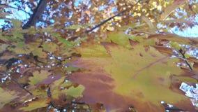 La caída asombrosa coloreó las hojas Foto de archivo libre de regalías