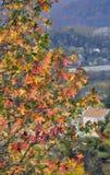 La caída bonita deja alto en una colina Foto de archivo