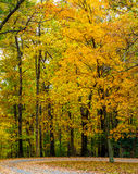La caída brillante coloreó las hojas en Ridge Parkway azul Foto de archivo