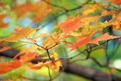 La caída coloreó las hojas Foto de archivo libre de regalías