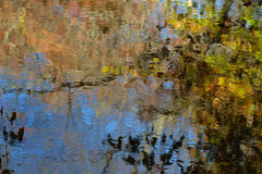 La caída coloreó las hojas reflejadas en un pequeño arroyo Foto de archivo libre de regalías