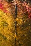 La caída colorea el extracto de las reflexiones del árbol Imagen de archivo