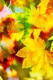 La caída colorea el fondo Fotos de archivo libres de regalías