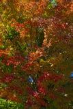 La caída colorea el fondo Imagen de archivo