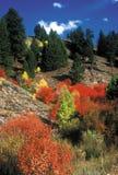 La caída colorea Fairfield, Idaho Fotografía de archivo