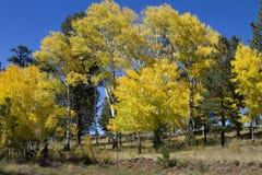 La caída colorea las hojas Arizona del bosque Foto de archivo