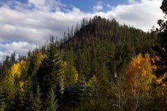 La caída colorea las hojas Arizona del bosque Imagen de archivo