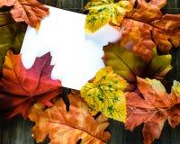 La caída colorida deja la tarjeta del blanco del marco Fotos de archivo