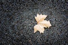 La caída de la hoja del árbol Fotografía de archivo