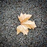 La caída de la hoja del árbol Imagenes de archivo