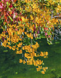 La caída de las hojas del amarillo colorea el río Washington de Wenatchee de la reflexión Fotografía de archivo libre de regalías