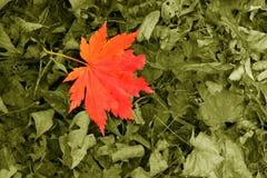 La caída de las hojas a la tierra Imagenes de archivo