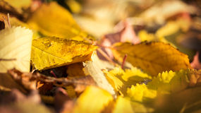 La caída del otoño se va en un piso de madera del bosque Imágenes de archivo libres de regalías