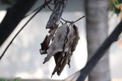 La caída hojea ejecución en árbol fotografía de archivo libre de regalías
