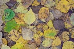 La caída multicolora deja textura del fondo Foto de archivo libre de regalías