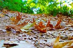 La caída octubre de la caída se va en la montaña de Belasitsa cerca de Petrich Bulgaria foto de archivo libre de regalías