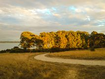 La caída y el otoño sazonan el fondo de la naturaleza con la trayectoria que camina, oro imagen de archivo libre de regalías