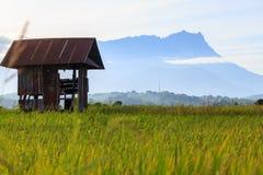 La cabaña en el campo de arroz Foto de archivo libre de regalías