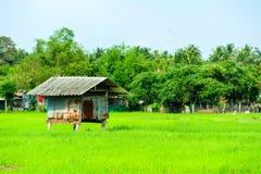 La caba?a es rodeada por los campos y el ?rbol verdes del arroz imagen de archivo