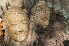 La cabeza antigua de Buda en la raíz del árbol Fotografía de archivo