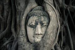 La cabeza de Buda, Ayutthaya, Tailandia foto de archivo