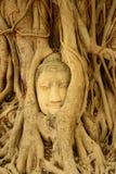 La cabeza de Buda embalada en árbol arraiga, Tailandia Foto de archivo libre de regalías