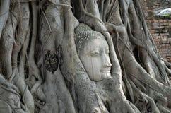 La cabeza de Buda en árbol arraiga (Ayutthaya) Foto de archivo