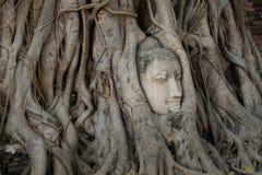 La cabeza de Buda en árbol arraiga en el templo Imagenes de archivo