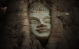 LA CABEZA DE BUDA en Ayutthaya Imagen de archivo libre de regalías