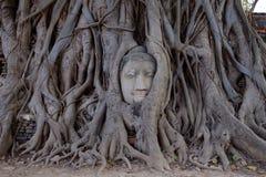 La cabeza de Buda en raíces del árbol, Fotografía de archivo