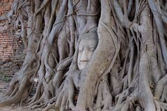 La cabeza de Buda en raíces del árbol, Foto de archivo libre de regalías