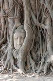 La cabeza de Buda en raíces del árbol foto de archivo libre de regalías