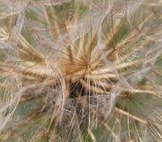 La cabeza de la semilla Imagen de archivo libre de regalías
