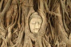 La cabeza de piedra del budda traped en las raíces del árbol en Wat Mahathat, Thail Imagen de archivo