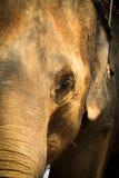 La cabeza de un elefante Foto de archivo libre de regalías