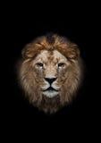 La cabeza de un león Foto de archivo