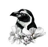 La cabeza de un pingüino de lado en perfil stock de ilustración